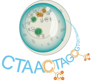 单细胞-图标474-01-01.jpg